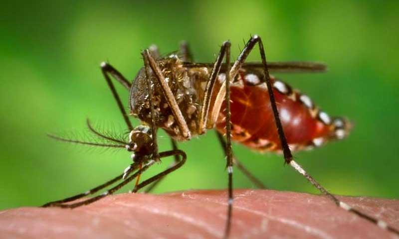 El ministro de Salud dijo que los insecticidas no sirven para combatir al mosquito del zika
